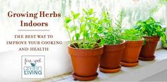 Growing Herbs Indoors: The Best Way to Improve Your Cooking