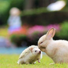 ウサギとハリネズミのナイショ話
