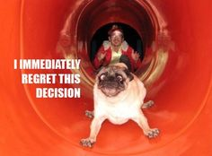 oh no doggie