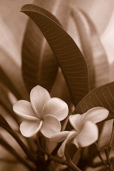 Gorgeous sepia tones! #photography