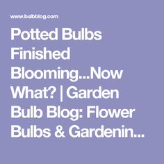Potted Bulbs Finished Blooming...Now What? | Garden Bulb Blog: Flower Bulbs & Gardening Tips