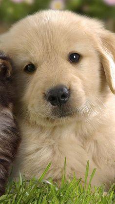 puppy_kitten_grass_flowers_couple_friendship_29330_640x113… | Flickr