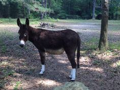 "There is no way we would leave our donkey ""Dash"" without fly protection! He is in the mini size Silver Whinnys."