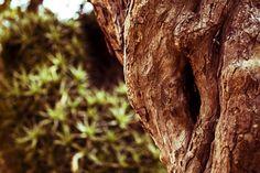 Treegina. 10/01/2013