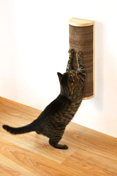 cat wall scratcher. Way better than having them on the floor