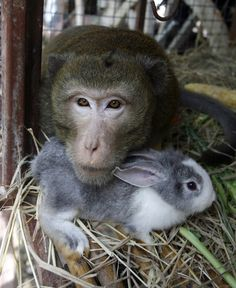 LOVE IS LOVE.   Why can't we learn from them??? 45 Adorable Animal Odd Couples