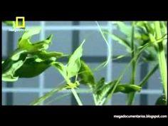 O Universo das Plantas (Completo e Dublado)-clube da natureza - YouTube