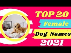 Top 20 Best Female Dog Names With Meaning 2021 ! Unique Puppy Names - YouTube Most Popular Dog Names, Best Dog Names, Puppy Names, Pet Names, Best Dogs, Police Dog Names, Police Dogs, Cute Names For Dogs, Cute Dogs