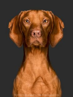 Biometric - For media and licensing requests: info@elkevogelsang.com
