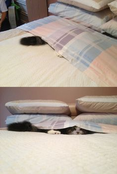 Funny Animal Pictures - View our collection of cute and funny pet videos and pics. New funny animal pictures and videos submitted daily. Crazy Cat Lady, Crazy Cats, I Love Cats, Cool Cats, Animal Pictures, Cute Pictures, Random Pictures, Funny Animals, Cute Animals
