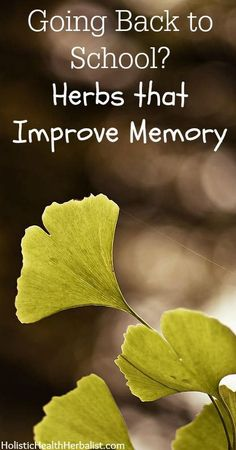 Going Back to School? Herbs that Improve Memory - Herbs aren't just good for colds and flu. Some of them in fact, are quite efficient at promoting memory retention and have been used for centuries as memory aids and attention pick-me-ups.