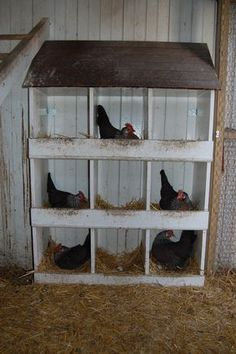 """Busy Silver leghorn hens laying in the spring. I like to call this picture """"Chick Tac Toe"""""""