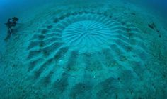 puffer fish creates circular patterns in sand on sea floor to attract females for mating (1)