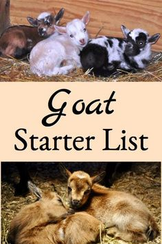 Starter List This goat starter list identifies a beginning list of items to have on hand or in place before getting your first goats so you are prepared to deal with any basic problems.Beginning Beginning may refer to: Raising Farm Animals, Raising Goats, Mini Goats, Baby Goats, Pigmy Goats, Keeping Goats, Goat Shelter, Goat Pen, Goat House