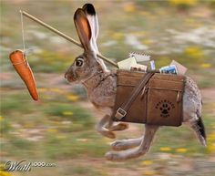 lapin-carotte