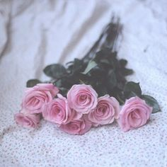 pink roses  #freepeople #roses #valentinesday |