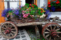 flowers in italy | ... , europe, flower cart, flowers, horizontal, images, italy, moseralm