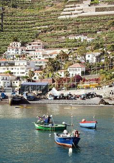 Cámara de Lobos. Madeira. Portugal