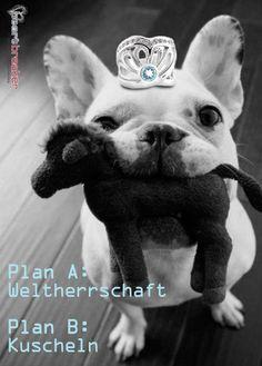 Plan A: Weltherrschaft übernehmen Plan B: Kuscheln