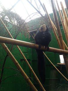 Dublin zoo Dublin Zoo, Animals, Animales, Animaux, Animal, Animais