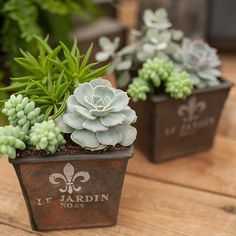 Rustic Containers with succulents