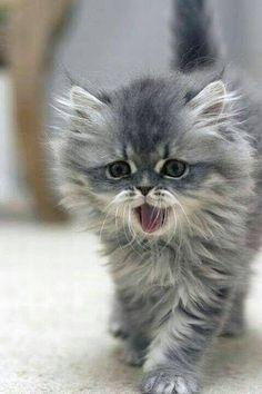 Pretty fluffy baby!!❤❤