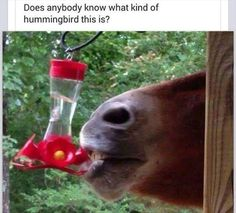 Does anybody know what kind of hummingbird this is?