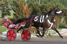 Wiggle It Jiggleit, In The Arsenal and Wazikashi Hanover take NA Cup eliminations - Harness Racing Newsroom - USTA - USTROTTING