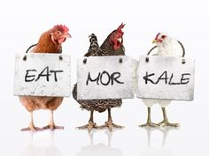 Don't eat more chikin. Eat more kale! #vegan