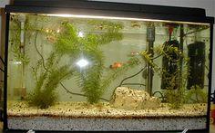 Wie macht man ein Aquarium sauber?