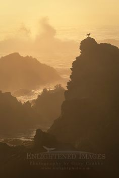 Bird on rock and crashing waves at sunset; Jug Handle State Natural Reserve; Mendocino County coast; California   -    (Photo Credit: Gary Crabbe / Enlightened Images; http://enlightphoto.com)