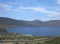 Οικόπεδο 685 τ.μ. προς πώληση Ανθηδώνος (Εύβοια) 539316_1    Spitogatos.gr