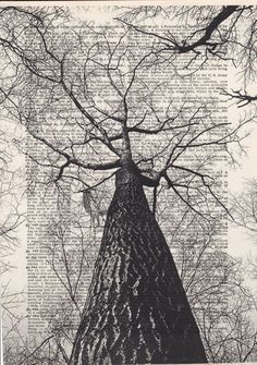 Description of this Print<<< This is a wonderful look view up into the winter sky through the trees. Each print is on a different page of