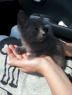 La nostra gattina Bijou