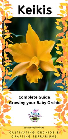 Top 8 Orchid Questions & Answers about Keikis — Orchideria Orchid Plant Care, Phalaenopsis Orchid Care, Orchid Plants, Orchid Propagation, Baby Orchid, Indoor Orchids, Build A Greenhouse, Mother Plant, How To Attract Hummingbirds