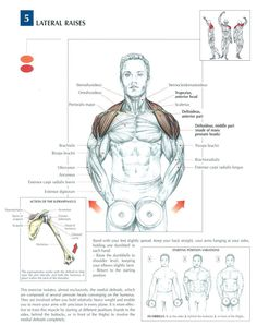 Anatomy of Dumbbell Lateral Raises Sport Fitness, Muscle Fitness, Mens Fitness, Fitness Tips, Health Fitness, Gain Muscle, Build Muscle, Sport Studio, Fitness Motivation