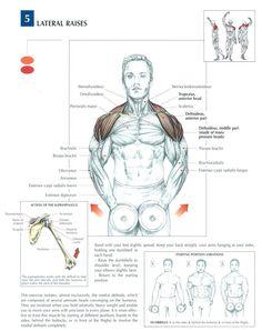 Elevaciones laterales para el deltoides.