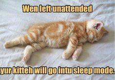 Wen left unattended, yur kitteh will go intu sleep mode.