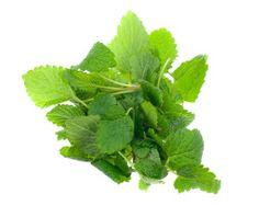 Lemon balm-a wonderful herb for conditions from colic to IBS, nervousness and anxiety to insomnia, middle ear infections to shingles. Dr. Maggie shares.