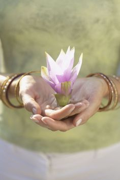 hands holding a lotus