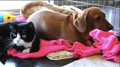 The Friendship Between This Abandoned Dog And Paralyzed Cat Will Melt Your Heart