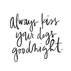 Best quotes from dogs for us. I Love Dogs, Cute Dogs, Animal Quotes, Pet Quotes, Dog Accessories, Dog Grooming, Dog Mom, Dog Life, Dogs And Puppies