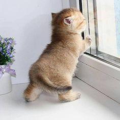 Precious Little Kitten looking out the window.