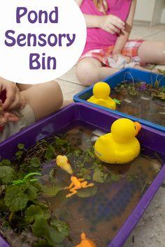 Sensory: Life with Moore Babies: Pond Sensory Bin Sensory Tubs, Sensory Boxes, Sensory Activities, Sensory Play, Learning Activities, Nature Activities, Teaching Ideas, Preschool Science, Preschool Classroom
