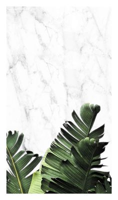 marble wallpaper with exotic leaves Leaves Wallpaper Iphone, Plant Wallpaper, Ocean Wallpaper, Aesthetic Iphone Wallpaper, Aesthetic Wallpapers, Wallpaper Ideas, Cherry Blossom Wallpaper, Plant Background, Plant Aesthetic