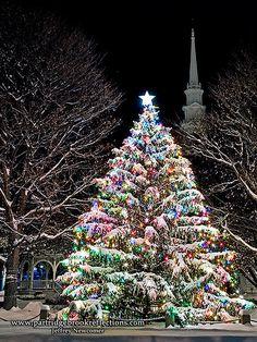 An amazing outdoor Christmas tree! Christmas Scenes, Christmas Mood, Noel Christmas, Christmas Images, Christmas Lights, Vintage Christmas, Christmas Decorations, Xmas, Christmas Central