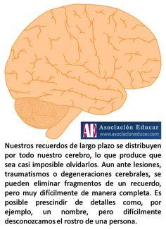 Infografía Neurociencias: Recuerdos de largo plazo. | Asociación Educar