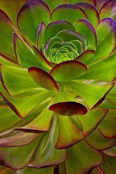 ~~Nature Patterns by Barbara Brown~~
