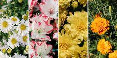 25 φυτά που φέρνουν πεταλούδες στον κήπο μας | Τα Μυστικά του Κήπου Butterflies Flying, Beautiful Butterflies, Plants That Attract Butterflies, Butterfly Species, Flowering Shrubs, Different Plants, Shades Of Yellow, Butterfly Wings, Dekoration