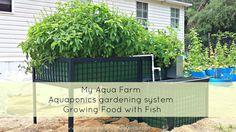 DIY Aquaponics. Aquaponics growing system - the combination of aquaculture and hydroponics.  Barrel-ponics® (a DIY aquaponics system)  perfect for the home garden.